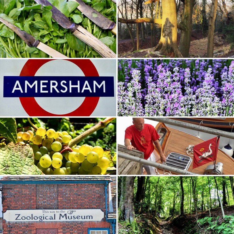 Eight images of Chilterns highlights