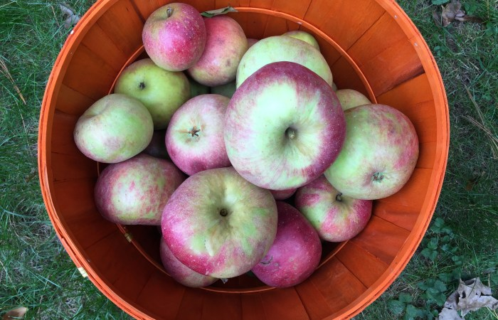 Where to Wednesday: Apple Picking & The New Graco Extend2Fit