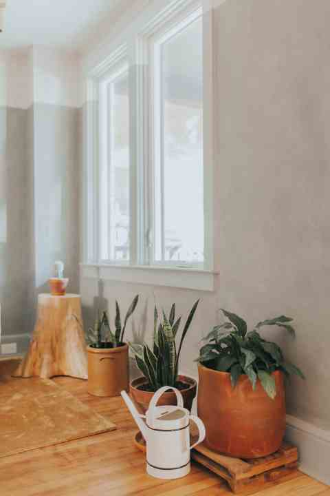 Plants used in Lancaster renovation