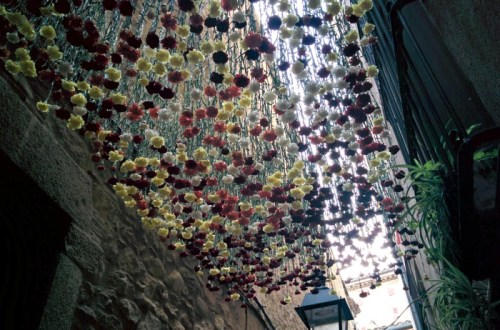 Roses hanging above an alley