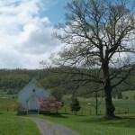 Pisgah Old Oak