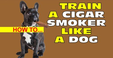 VODCast: How To Train A Cigar Smoker Like A Dog