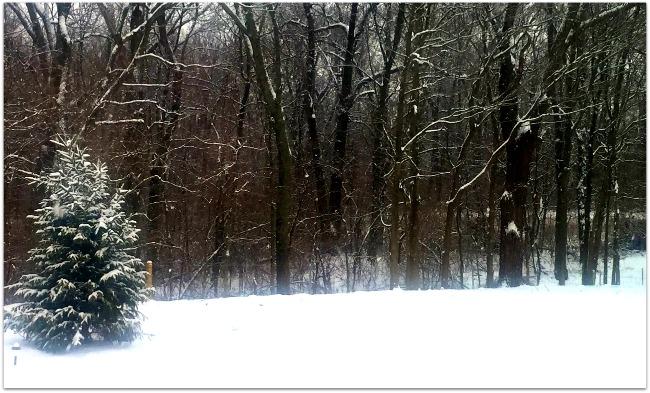 Cincinnati 2015 snow