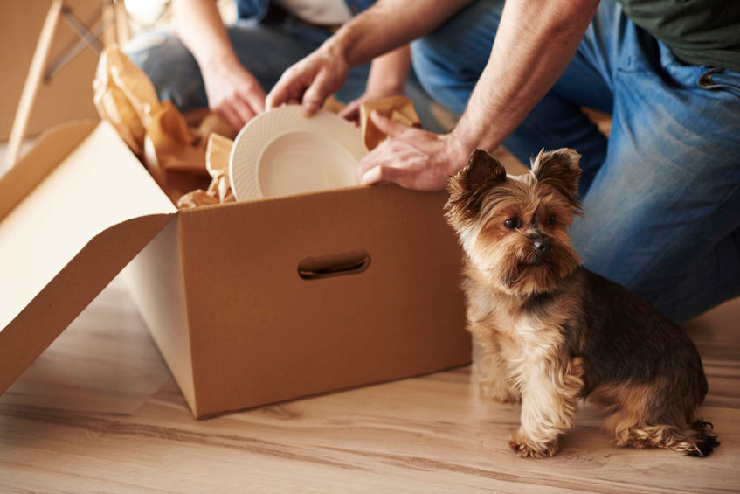 photo of dog with family packing to move