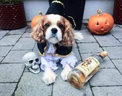 Meet Charlie. He's a six year old Cavalier King Charles from Templeogue. His favourite pastimes include dressing up and sleeping. Photo Credit: Emma Lucas
