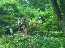 Image Source: Brooklyn Botanic Garden http://www.bbg.org/