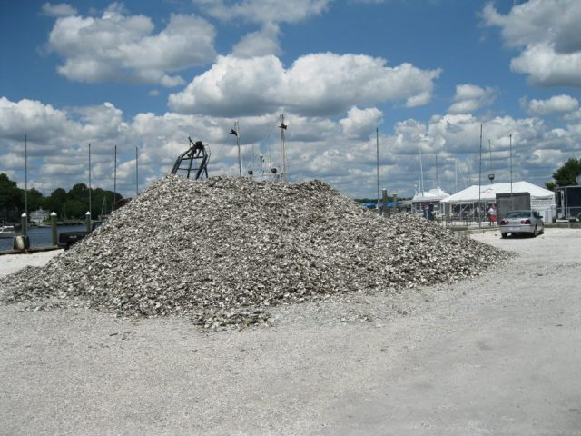 The big pile of shell.