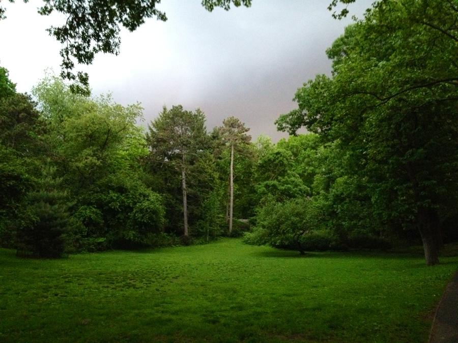 The park's trees absorb CO2, buffer heavy rain, and remove pollutants. (Ph: Caroline Kim)