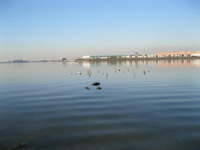 View of of the oyster reef from the shore located off of Soundview Park at the mouth of the Bronx River. Across the way you can see Hunt's Point.