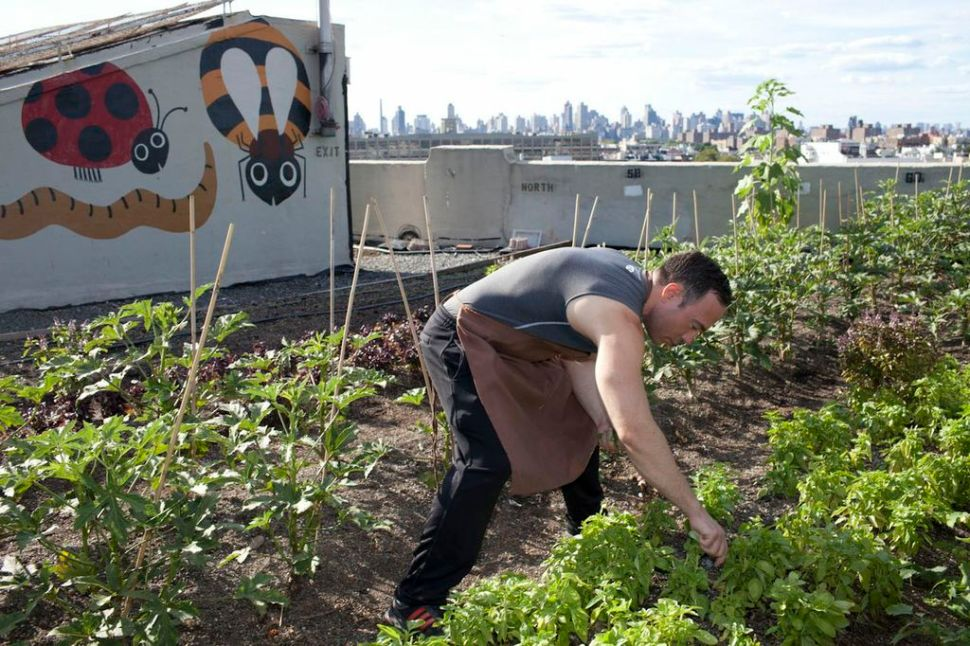 Coffee-bar owner visits rooftop farm for some fresh herbs. (Photo: Jessica Bruah)