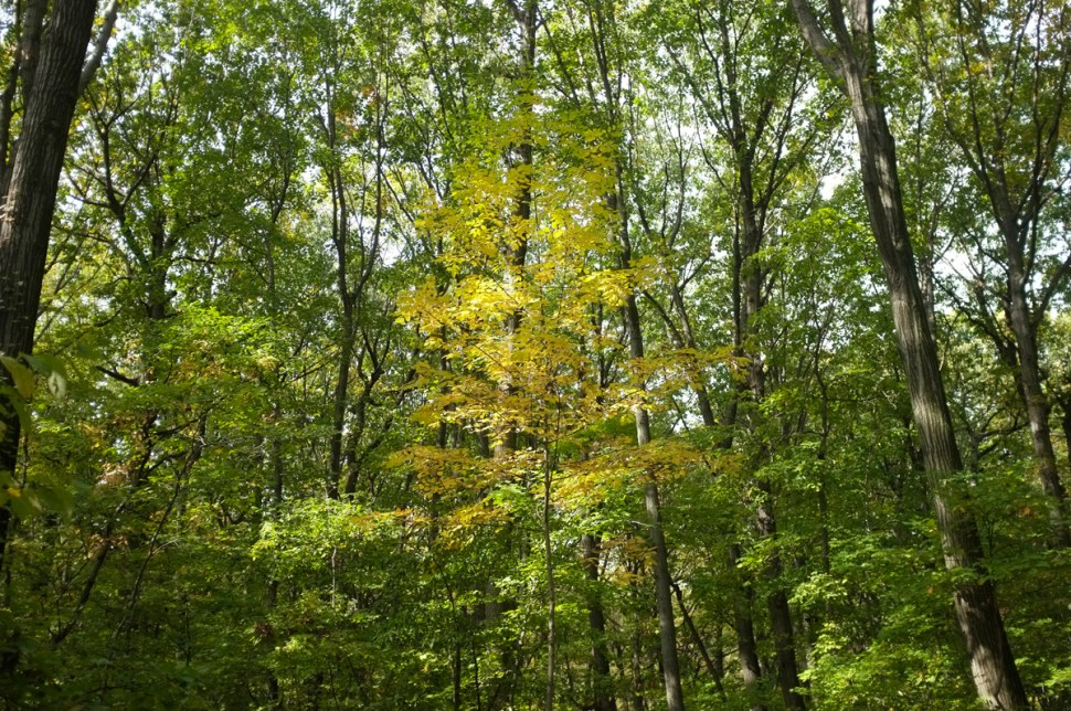 marielle_trees