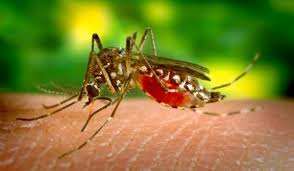 Malaria Kills More In Borno Than All Other Diseases – WHO