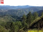 Pine Trees and Mountains from the peak of Mount Cabuyao