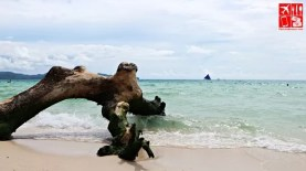 A drift wood by the shore of Boracay