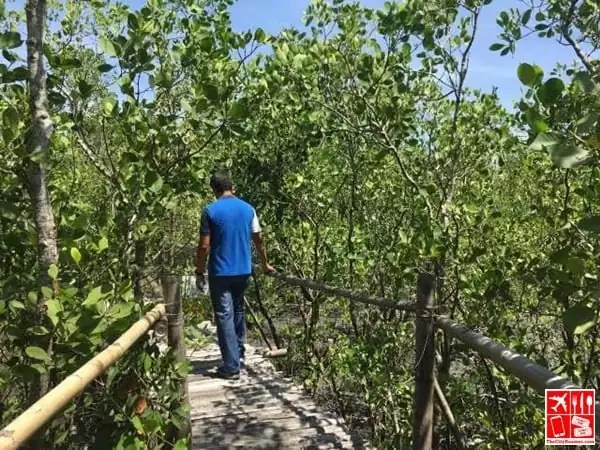 Exploring Silonay Mangrove Conservation and Eco Park