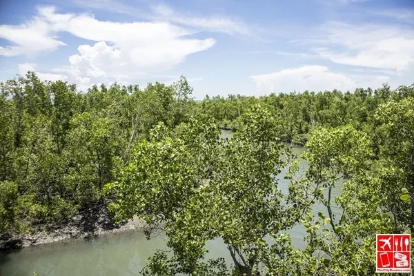 Silonay Mangrove Conservation and Eco Park