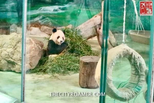 A panda kept at Taipei Zoo