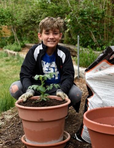 Ethan, tomato plant copy