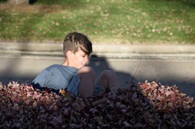 40 Leaf pile, 6931