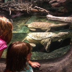 Checking out the enormous turtle.