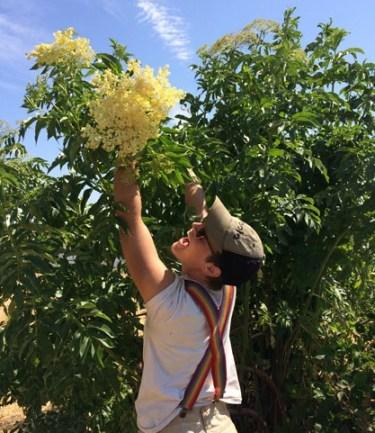 elderflower-picking.jpg