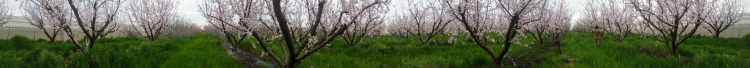 enchanted_orchard