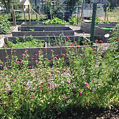 Flowers and vegetables are grown in the community garden in Liberty Park in Neptune. The park is expected to be expanded this year.
