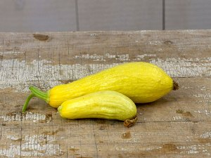 Straightneck Summer Squash Heirloom Vegetable Plant | The Coeur d'Alene Coop