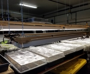 Coop Grow Lights | The Coeur d Alene Coop