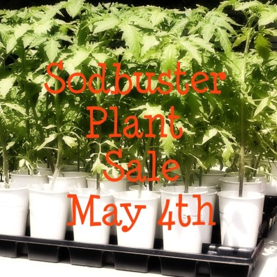 Early Plant Sale Survival Tips for You and Your Plants