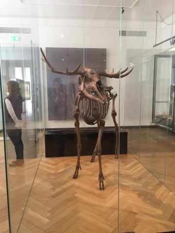 Just one of the cool skeletons you can see in the National Museum
