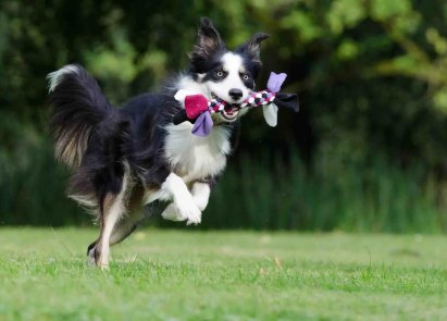 Positive Reinforcement [Easy Tips To Success In Training Your Dog] 3