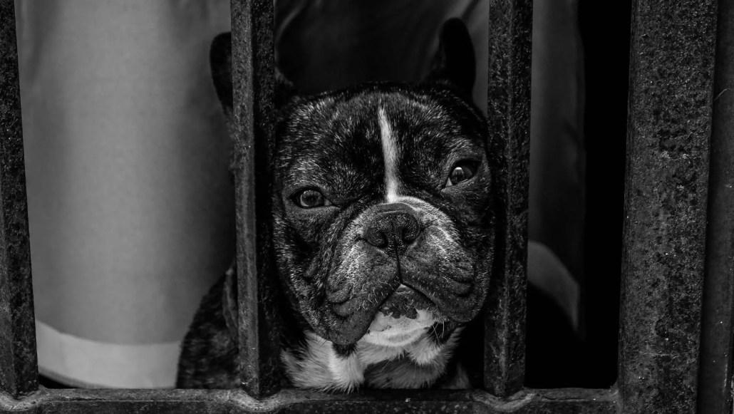 Barking when bound