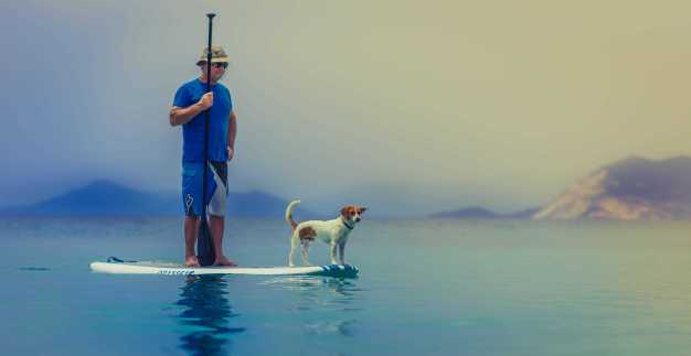 jack russel dog surf with owner backpacking with dogs