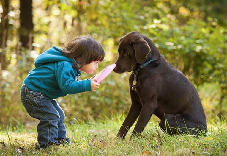 baby girl with brown labrador playing with a frisbe dog training positive reinforcement