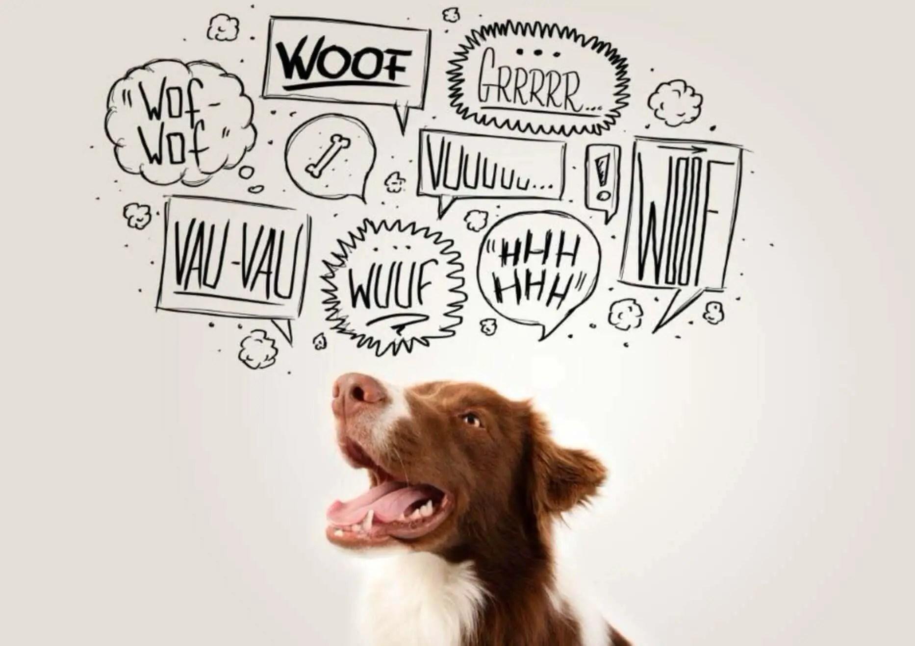 homemade vegan dog food diet