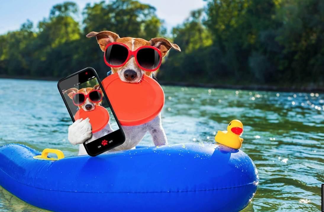 jack russel con frisbee e giochi per cani sull'acqua
