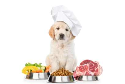 labrador dog food healthy