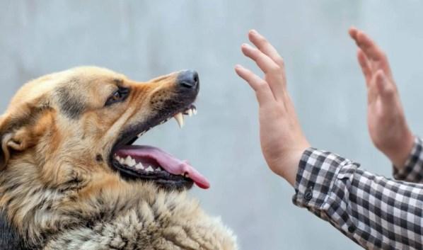 dog aggressive hand