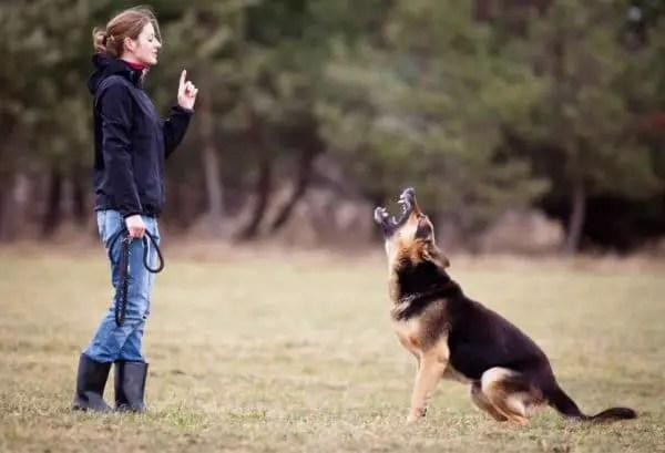 Addestrare cane addestramento cane