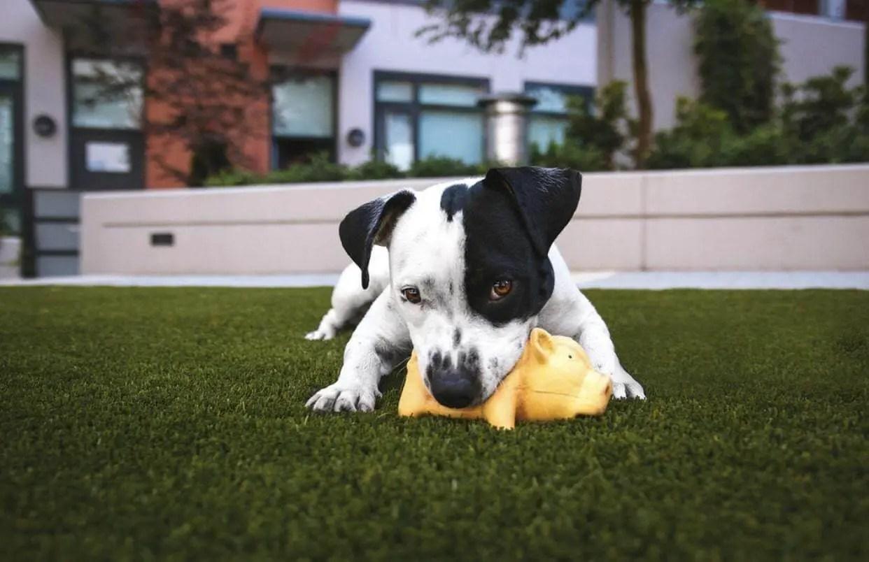 Come Educare & Addestrare Un Cucciolo Di Cane Nel 2019 88