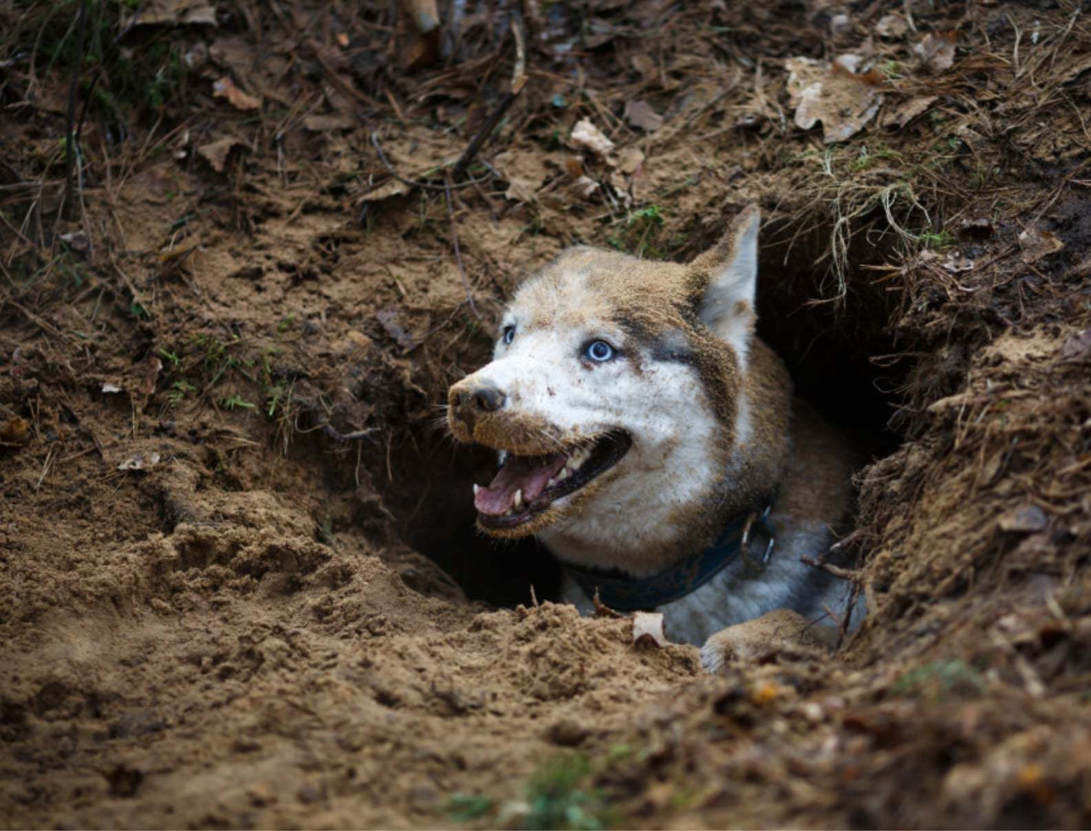 dog digging a hole can be solved with positive reinforcement