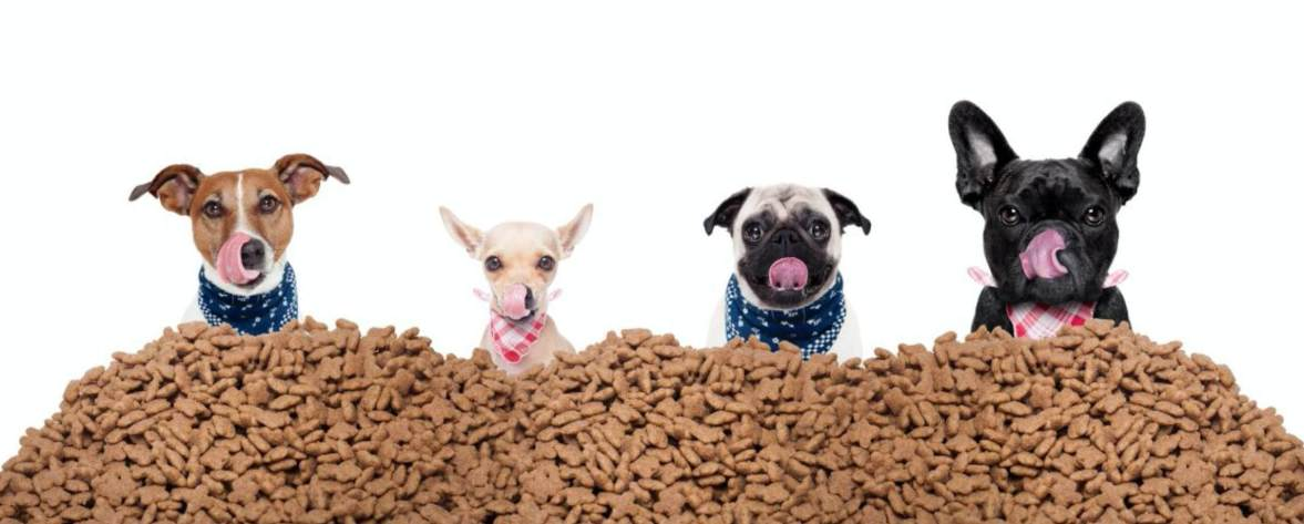 dog food dog treats treat your dog in dog training