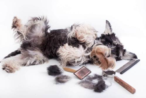 dog hair dog grooming dog user manual