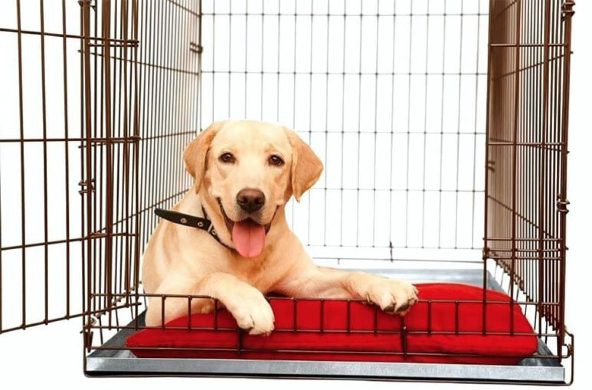 crate your dog during teething to stop your dog bad bite behaviour problem