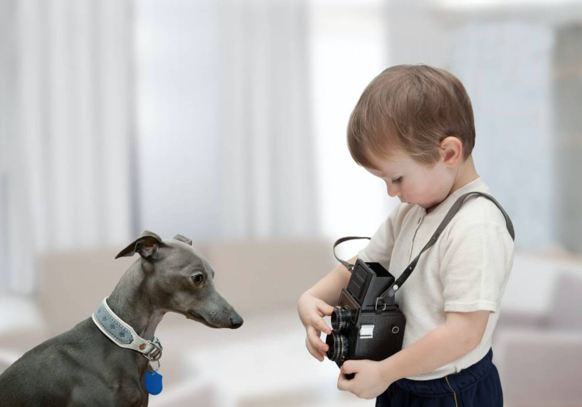 whippet dog pose for the camera with a young child pet photographer