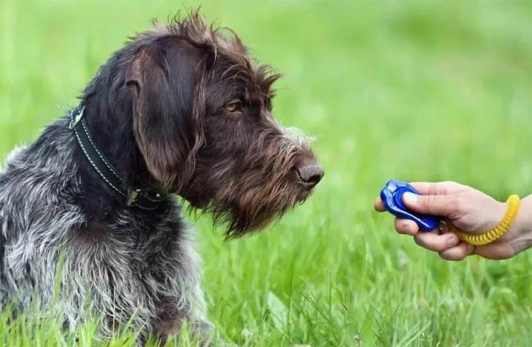 come addestrare un cane o un cucciolo con il clicker e il rinforzo positivo addestramento cani