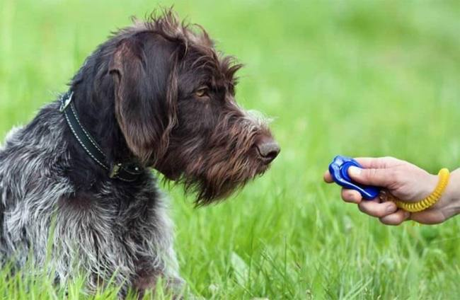 teach your dog tricks with clicker positive reinforcement