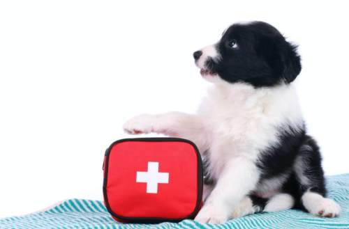 first aid kit dog puppy dog owner training
