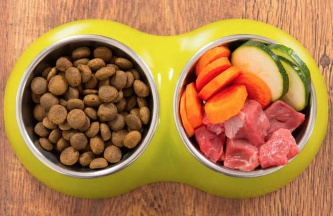 orijen dry food for happy dog owners